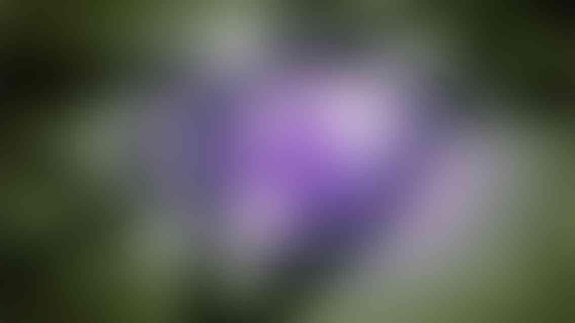 photo 02 v011 - photo_02_v01